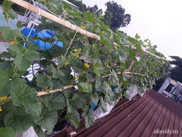 Dù không có sân thượng nhưng mẹ đảm ở Sài Gòn vẫn có được vườn nông sản xanh mướt trên mái tôn - Ảnh 15.