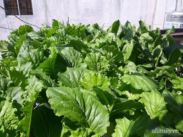 Dù không có sân thượng nhưng mẹ đảm ở Sài Gòn vẫn có được vườn nông sản xanh mướt trên mái tôn - Ảnh 3.