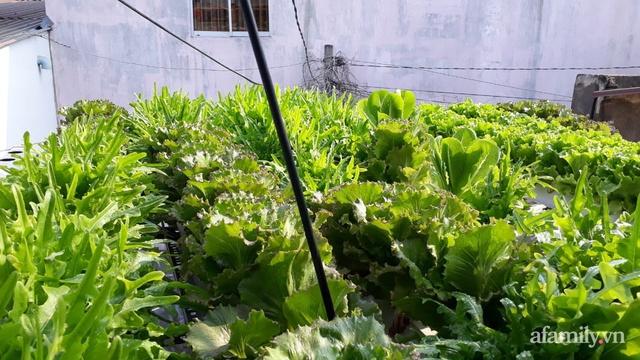 Dù không có sân thượng nhưng mẹ đảm ở Sài Gòn vẫn có được vườn nông sản xanh mướt trên mái tôn - Ảnh 23.