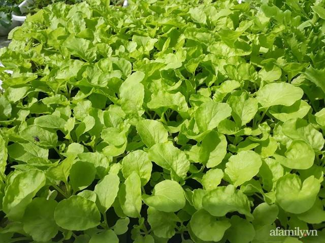 Dù không có sân thượng nhưng mẹ đảm ở Sài Gòn vẫn có được vườn nông sản xanh mướt trên mái tôn - Ảnh 25.