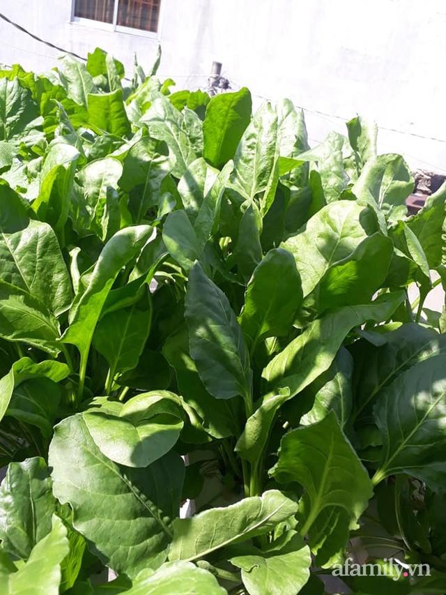 Dù không có sân thượng nhưng mẹ đảm ở Sài Gòn vẫn có được vườn nông sản xanh mướt trên mái tôn - Ảnh 26.