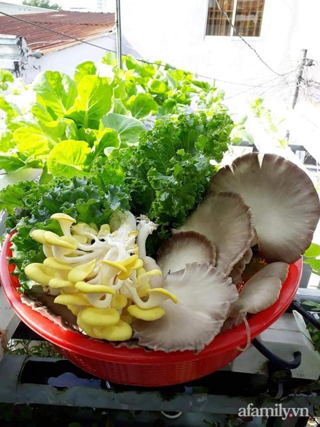 Dù không có sân thượng nhưng mẹ đảm ở Sài Gòn vẫn có được vườn nông sản xanh mướt trên mái tôn - Ảnh 30.