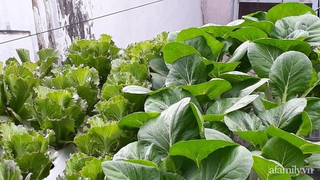 Dù không có sân thượng nhưng mẹ đảm ở Sài Gòn vẫn có được vườn nông sản xanh mướt trên mái tôn - Ảnh 4.