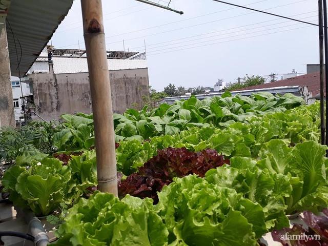 Dù không có sân thượng nhưng mẹ đảm ở Sài Gòn vẫn có được vườn nông sản xanh mướt trên mái tôn - Ảnh 5.