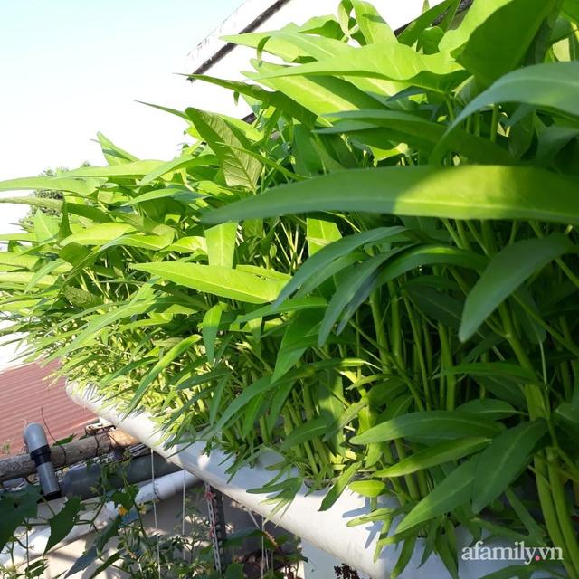 Dù không có sân thượng nhưng mẹ đảm ở Sài Gòn vẫn có được vườn nông sản xanh mướt trên mái tôn - Ảnh 6.
