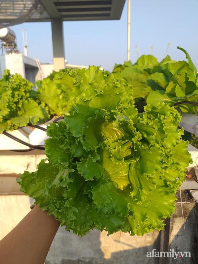 Dù không có sân thượng nhưng mẹ đảm ở Sài Gòn vẫn có được vườn nông sản xanh mướt trên mái tôn - Ảnh 9.