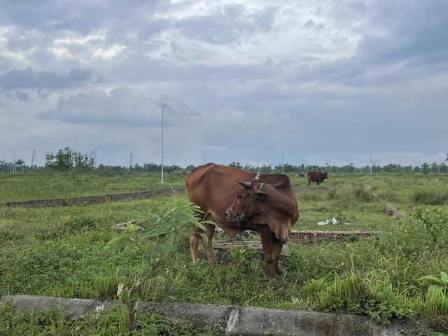 """Cập nhật giá đất ở Nam An Khánh, Mê Linh…và một số """"điểm nóng"""": Ngỡ ngàng nơi tăng nóng, chỗ rơi sâu - Ảnh 2."""