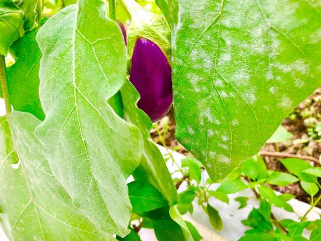 Khu vườn 100m2 xanh tươi của Thủy Tiên - Công Vinh trong biệt thự ở khu nhà giàu: Đầy rau trái xum xuê, ai cũng mơ ước! - Ảnh 9.
