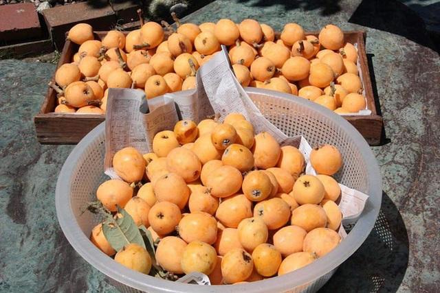 Nhật Bản có loại quả mọc dại đầy đường không ai hái, về đến Việt Nam có giá lên tới 4 triệu/kg, chỉ dành cho hội nhà giàu? - Ảnh 4.