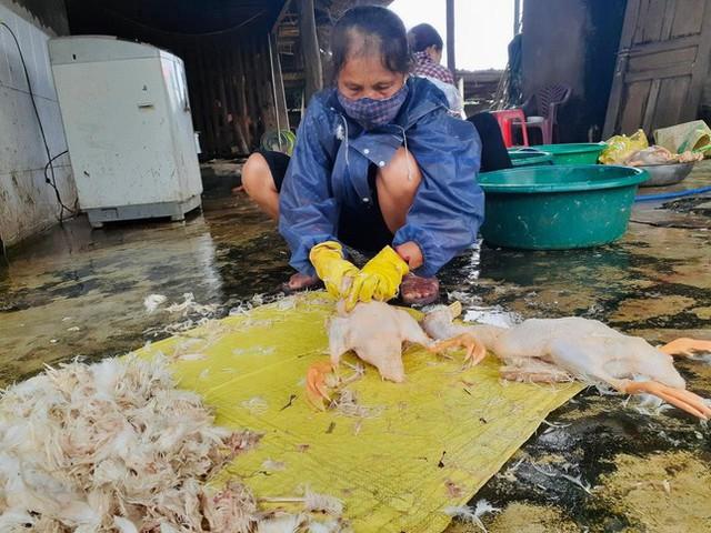 Bị phong tỏa, làng vịt nổi tiếng nhất Hà Tĩnh vắng khách ngày Tết Đoan Ngọ  - Ảnh 7.