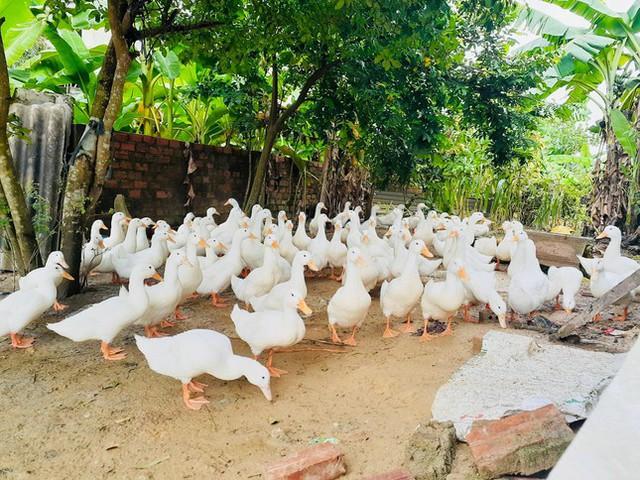 Bị phong tỏa, làng vịt nổi tiếng nhất Hà Tĩnh vắng khách ngày Tết Đoan Ngọ  - Ảnh 8.