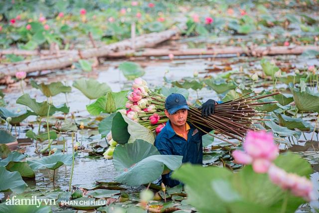 Đầm sen KHỦNG NHẤT VIỆT NAM với gần 170 loại sen quý trên khắp thế giới, mới mở được 2 năm nên nhiều người yêu sen nhất Hà Nội cũng chưa chắc biết - Ảnh 19.