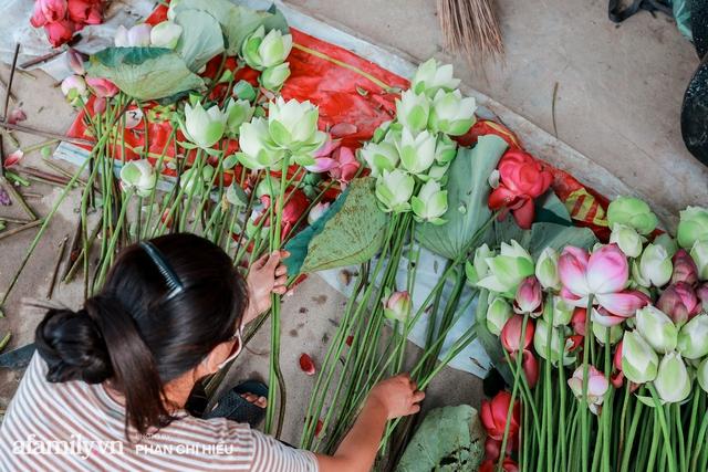 Đầm sen KHỦNG NHẤT VIỆT NAM với gần 170 loại sen quý trên khắp thế giới, mới mở được 2 năm nên nhiều người yêu sen nhất Hà Nội cũng chưa chắc biết - Ảnh 20.