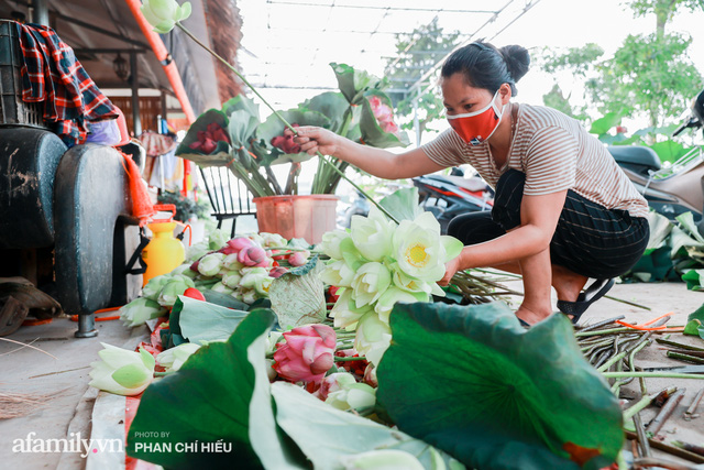 Đầm sen KHỦNG NHẤT VIỆT NAM với gần 170 loại sen quý trên khắp thế giới, mới mở được 2 năm nên nhiều người yêu sen nhất Hà Nội cũng chưa chắc biết - Ảnh 21.