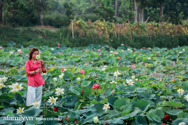 Đầm sen KHỦNG NHẤT VIỆT NAM với gần 170 loại sen quý trên khắp thế giới, mới mở được 2 năm nên nhiều người yêu sen nhất Hà Nội cũng chưa chắc biết - Ảnh 23.