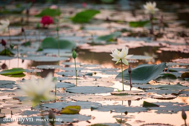 Đầm sen KHỦNG NHẤT VIỆT NAM với gần 170 loại sen quý trên khắp thế giới, mới mở được 2 năm nên nhiều người yêu sen nhất Hà Nội cũng chưa chắc biết - Ảnh 6.