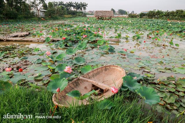 Đầm sen KHỦNG NHẤT VIỆT NAM với gần 170 loại sen quý trên khắp thế giới, mới mở được 2 năm nên nhiều người yêu sen nhất Hà Nội cũng chưa chắc biết - Ảnh 7.