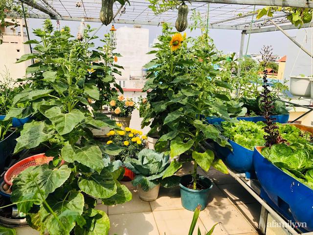 Khu vườn thạch sanh bội thu rau quả quanh năm trên sân thượng ở Sài Gòn - Ảnh 1.