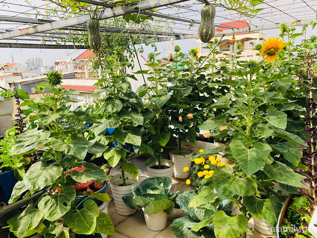 Khu vườn thạch sanh bội thu rau quả quanh năm trên sân thượng ở Sài Gòn - Ảnh 2.