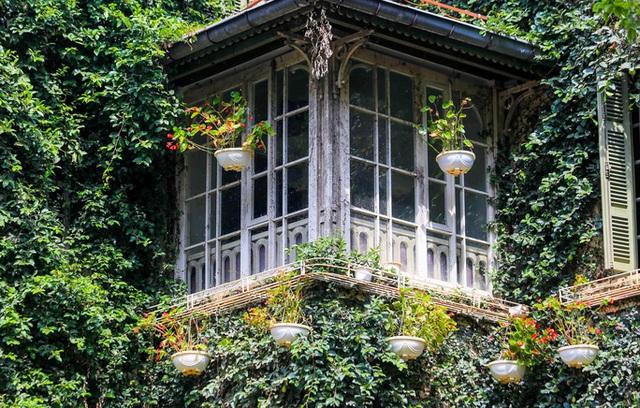 Cận cảnh ngôi biệt thự phủ toàn cây xanh giúp chủ nhà tránh nắng nóng gay gắt  - Ảnh 2.