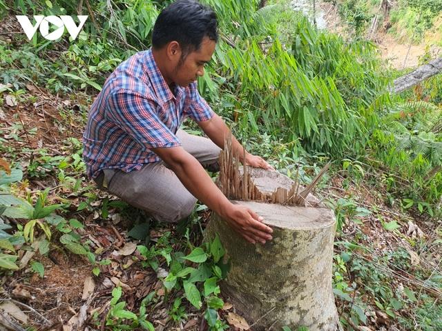 Cận cảnh thủy điện TrHy 13 năm xây chưa xong, cây rừng bị chặt ngổn ngang - Ảnh 11.