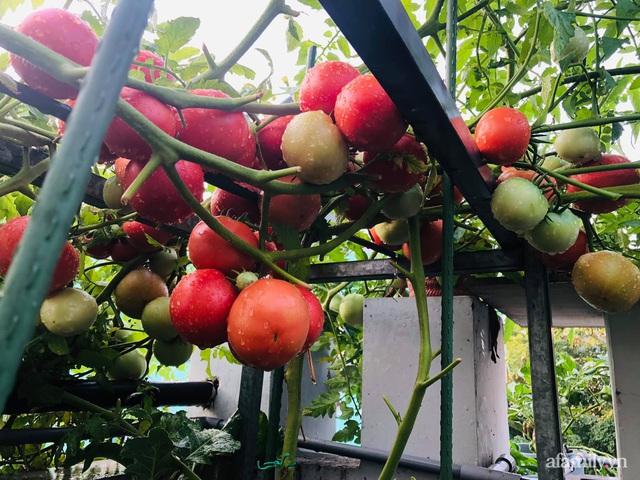 Khu vườn thạch sanh bội thu rau quả quanh năm trên sân thượng ở Sài Gòn - Ảnh 11.