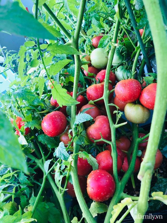 Khu vườn thạch sanh bội thu rau quả quanh năm trên sân thượng ở Sài Gòn - Ảnh 16.