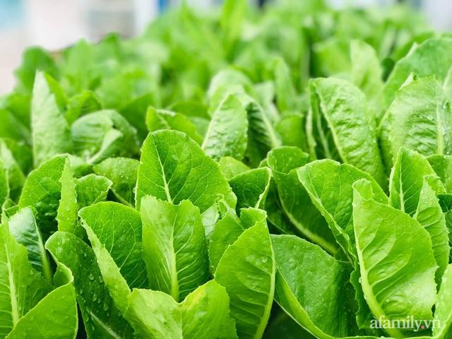 Khu vườn thạch sanh bội thu rau quả quanh năm trên sân thượng ở Sài Gòn - Ảnh 20.
