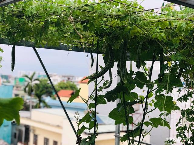 Khu vườn thạch sanh bội thu rau quả quanh năm trên sân thượng ở Sài Gòn - Ảnh 3.