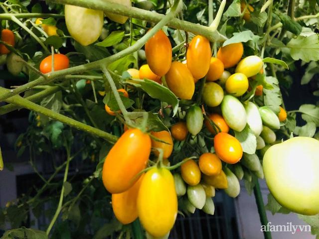 Khu vườn thạch sanh bội thu rau quả quanh năm trên sân thượng ở Sài Gòn - Ảnh 22.