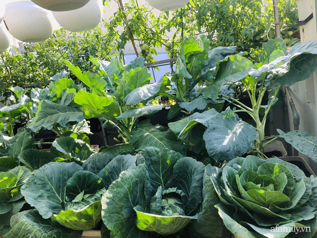 Khu vườn thạch sanh bội thu rau quả quanh năm trên sân thượng ở Sài Gòn - Ảnh 23.