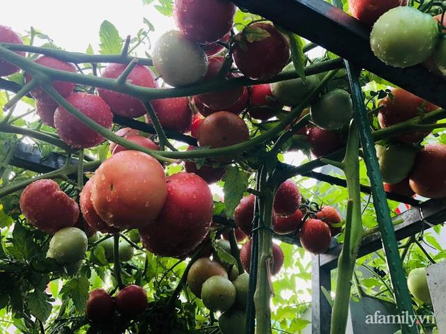 Khu vườn thạch sanh bội thu rau quả quanh năm trên sân thượng ở Sài Gòn - Ảnh 24.