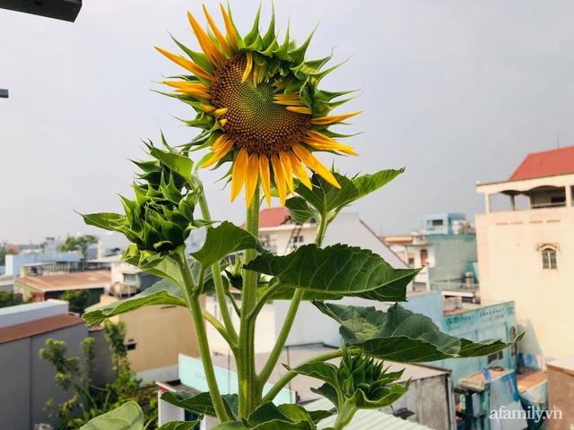 Khu vườn thạch sanh bội thu rau quả quanh năm trên sân thượng ở Sài Gòn - Ảnh 28.