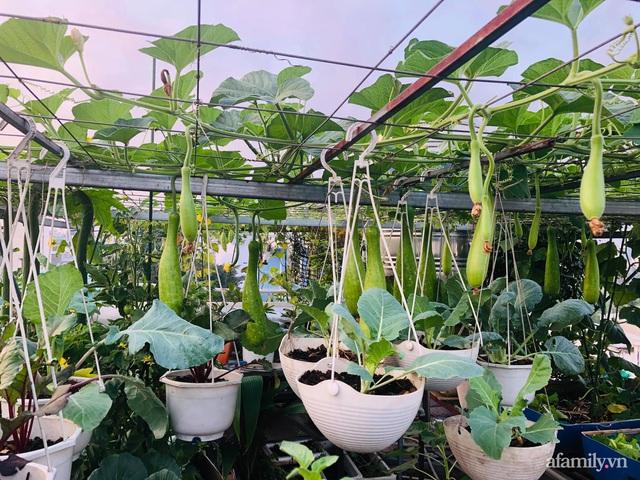 Khu vườn thạch sanh bội thu rau quả quanh năm trên sân thượng ở Sài Gòn - Ảnh 4.