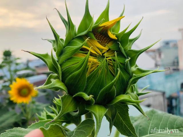 Khu vườn thạch sanh bội thu rau quả quanh năm trên sân thượng ở Sài Gòn - Ảnh 35.