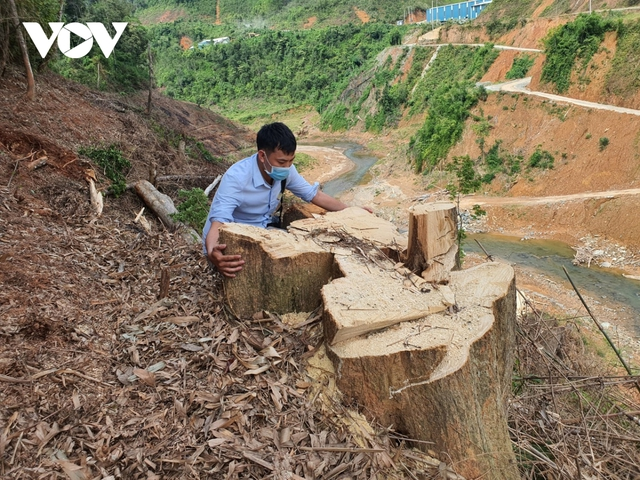 Cận cảnh thủy điện TrHy 13 năm xây chưa xong, cây rừng bị chặt ngổn ngang - Ảnh 5.