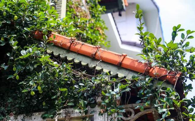 Cận cảnh ngôi biệt thự phủ toàn cây xanh giúp chủ nhà tránh nắng nóng gay gắt  - Ảnh 6.
