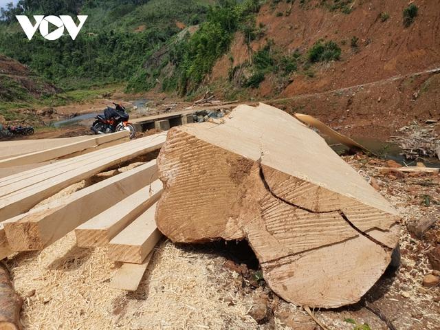 Cận cảnh thủy điện TrHy 13 năm xây chưa xong, cây rừng bị chặt ngổn ngang - Ảnh 7.
