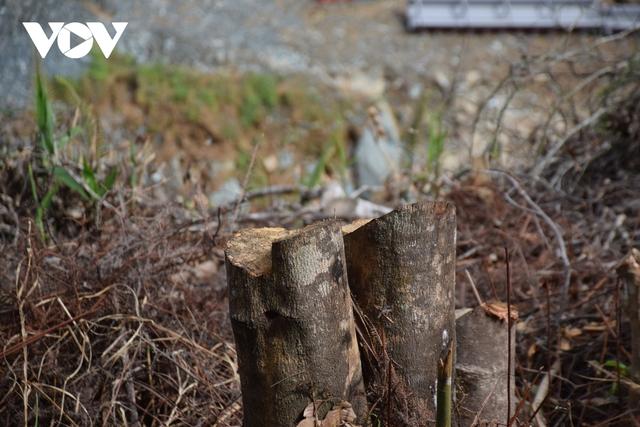 Cận cảnh thủy điện TrHy 13 năm xây chưa xong, cây rừng bị chặt ngổn ngang - Ảnh 9.