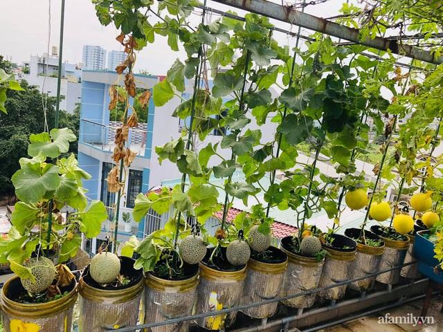 Khu vườn thạch sanh bội thu rau quả quanh năm trên sân thượng ở Sài Gòn - Ảnh 9.