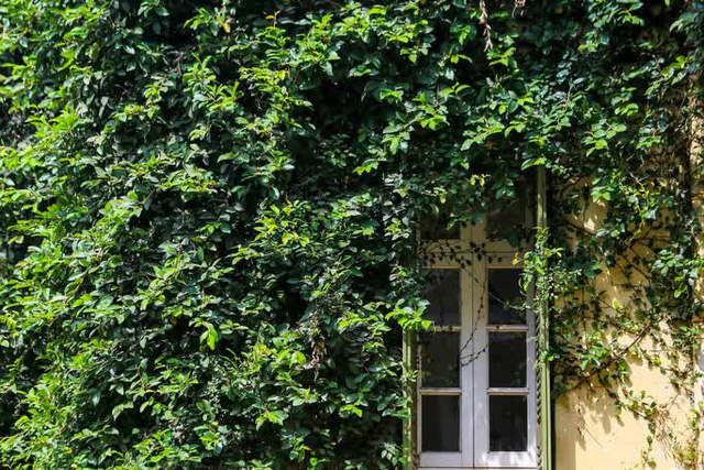 Cận cảnh ngôi biệt thự phủ toàn cây xanh giúp chủ nhà tránh nắng nóng gay gắt  - Ảnh 9.