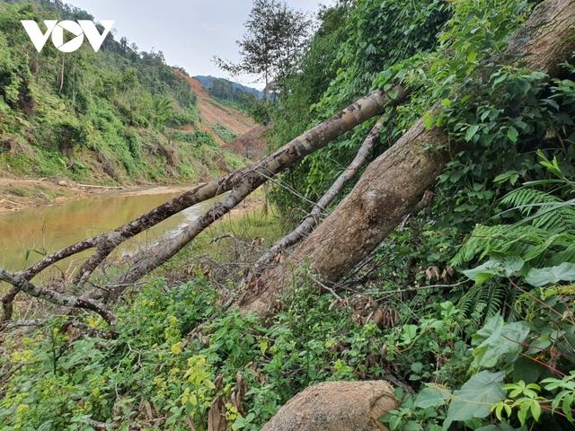 Cận cảnh thủy điện TrHy 13 năm xây chưa xong, cây rừng bị chặt ngổn ngang - Ảnh 10.