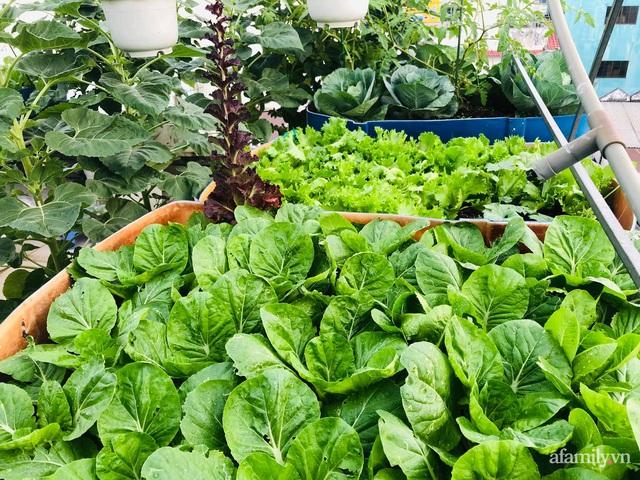 Khu vườn thạch sanh bội thu rau quả quanh năm trên sân thượng ở Sài Gòn - Ảnh 10.