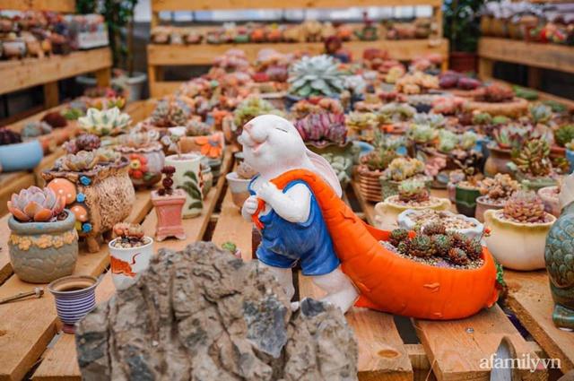 Khu vườn có hơn 100 loài sen đá rực rỡ trên sân thượng của vợ chồng trẻ Hải Phòng - Ảnh 2.