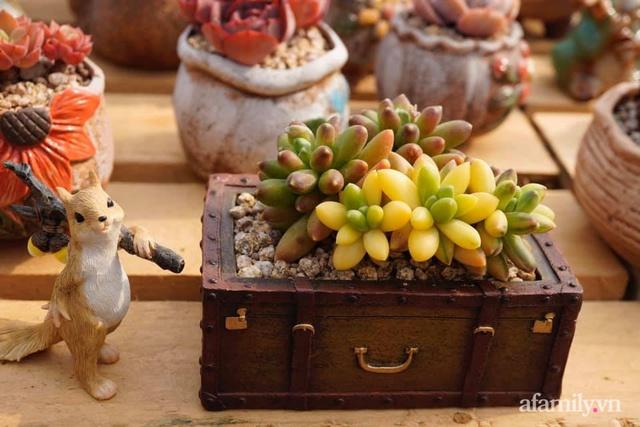 Khu vườn có hơn 100 loài sen đá rực rỡ trên sân thượng của vợ chồng trẻ Hải Phòng - Ảnh 13.