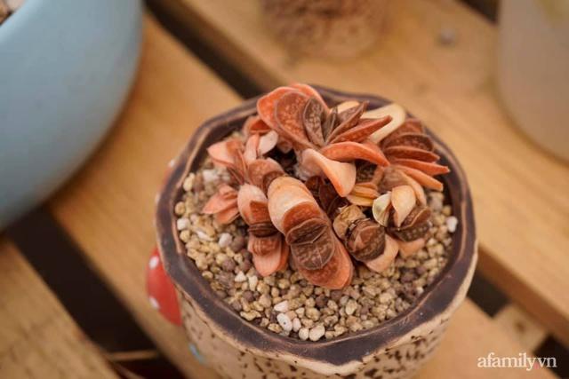 Khu vườn có hơn 100 loài sen đá rực rỡ trên sân thượng của vợ chồng trẻ Hải Phòng - Ảnh 32.