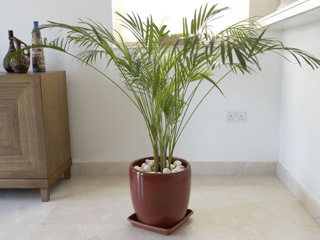 12 loại cây cảnh được NASA gợi ý nên trồng trong nhà để lọc không khí và cải thiện sức khỏe - Ảnh 5.