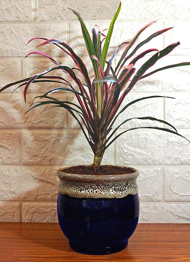 12 loại cây cảnh được NASA gợi ý nên trồng trong nhà để lọc không khí và cải thiện sức khỏe - Ảnh 8.