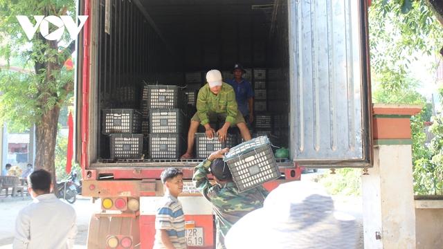 Sơn La xuất khẩu và tiêu thụ gần 7.000 tấn xoài Mường La  - Ảnh 2.
