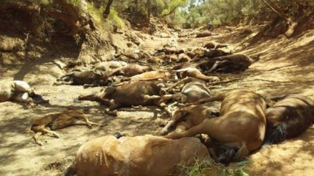 Chùm ảnh nắng nóng hãi hùng trên khắp thế giới: Tan chảy cả nhựa đường, ngựa chết cả đàn như bị thảm sát gây khiếp đảm - Ảnh 4.